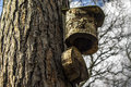 Bird feeder out of wood Stock Photo