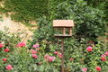 Bird feeder wooden for birds with pink flowers roses and wall overgrown with green ivy behind Royalty Free Stock Photos