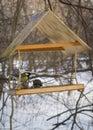 Bird feeders fly tiny wooden wild Stock Image