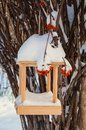 Bird feeders in a snowy forest Stock Photography