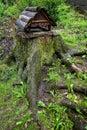 Bird feeders on the stump.