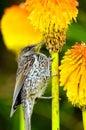 Bird feeding on flower Royalty Free Stock Photo