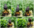 Bird feeding its Nestlings Royalty Free Stock Photo