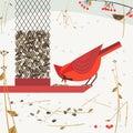 Bird feeding poster Royalty Free Stock Photo