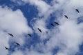 Bird in flight into the blue sky. Royalty Free Stock Photo
