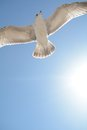 Bird flying in front of the sun Royalty Free Stock Photo