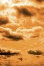 Bird Flying In The Sunset Sky