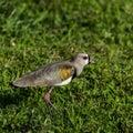 Bird On The Grass