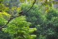 Bird On Green Tree