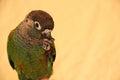 Bird Having A Snack