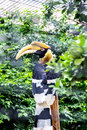 Bird hornbill mouth of length to half wide flat toe is very suitable for tree climbing activities a pair of big eyes covered with Royalty Free Stock Image