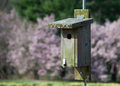 BIrd House and Magnolias Stock Photo
