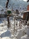 Bird house with snow and little wooden house in my organic garden