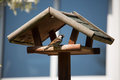 Bird House sparrow in the garden Royalty Free Stock Photo