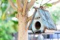 Uccello casa