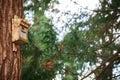 Bird house tree on trunk Stock Photo