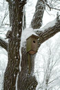 Bird house on the tree in winter Royalty Free Stock Photo