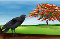 Bird illustration of a black Royalty Free Stock Images