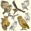 Bird illustration series Stock Images