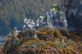 Bird Island near Kodiak Island Stock Photography