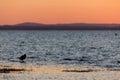 Bird on a lake shore at sunset Royalty Free Stock Photo