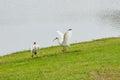 A bird is landing