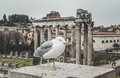 Bird life in Rome. anciant tample valley