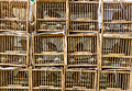 Bird market in hong kong Stock Image