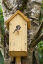 Bird on nest box Royalty Free Stock Photo