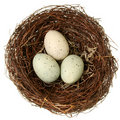 Bird nest eco-friendly concept Royalty Free Stock Photo