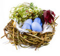 Bird nest with eggs Royalty Free Stock Image