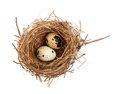 Bird nest and eggs on white Stock Photography
