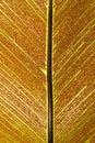 Bird-nest fern and spore Royalty Free Stock Photo