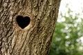 Bird nest in hollow trunk Stock Photos
