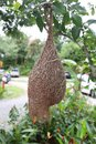 Bird Nest Or Skylark Nests On ...
