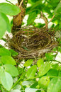 Bird nest in a tree Stock Photography