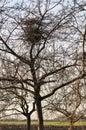 Bird nest in tree Royalty Free Stock Photo