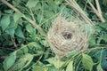 Bird nest on tree Royalty Free Stock Photo