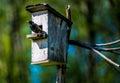 Bird And Nesting Box
