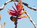 Bird and orange flower Royalty Free Stock Photo
