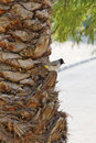 Bird on a palm trunk Royalty Free Stock Photo