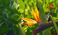 Bird Of Paradise On Colorful B...