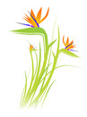 Bird of Paradise Flower (Strelitzia) Stock Image