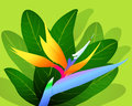 Bird of Paradise - illustration Royalty Free Stock Image