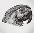 Bird parrot hand drawing vector illustration Stock Photo