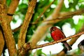 Bird passerine perched on branch in aviary a a tree an butterfly world south florida Stock Image