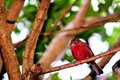 Bird passerine perched on branch in florida a a tree an aviary butterfly world south Stock Image