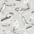 Bird pattern sparrow pigeon bullfinch titmouse background vintage bird branch Stock Images