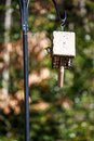 Bird peeking out from feeder new in a woodland park with birds feeding Royalty Free Stock Photos