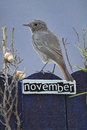Bird perched on a november decorated fence black redstart with letters and motifs Royalty Free Stock Photo